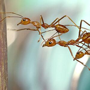"<img src=""Mutual Aid Ants.jpg"" alt=""Social Service or Social Change""/>"